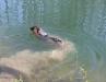 Treu im Wasser