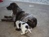 Kora und Viby 4 Wochen alt